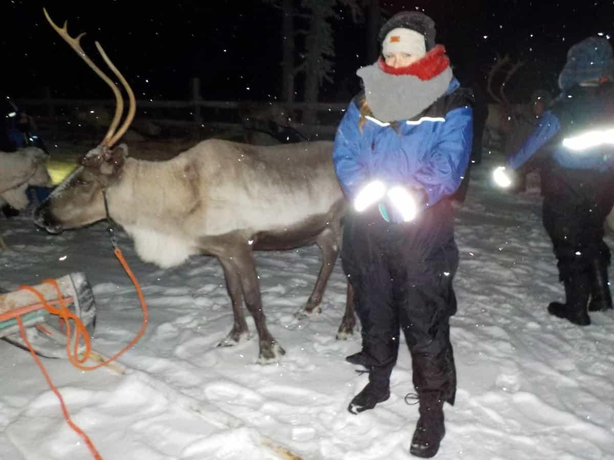 Finland- Reindeer