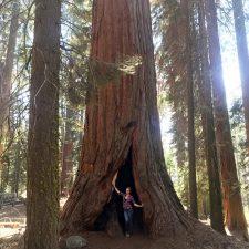Sequoia 3