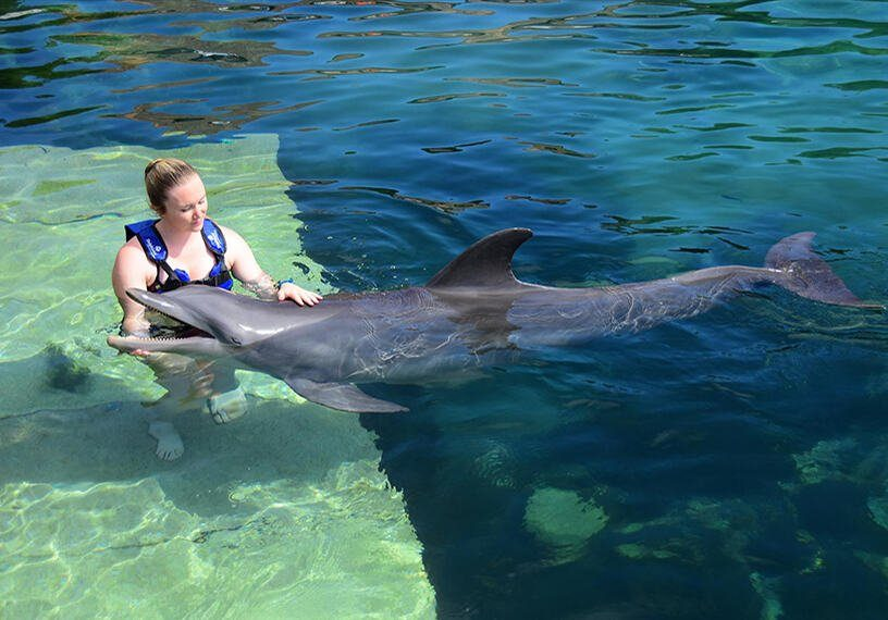Delphinus, a Chance to Play with Dolphins