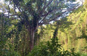 kauai-adventure-lover-destination-travel-adventure-malories-adventures-malorie-mackey-main-image